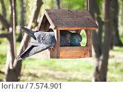 Купить «Два голубя в кормушке», эксклюзивное фото № 7574901, снято 7 мая 2015 г. (c) Алёшина Оксана / Фотобанк Лори