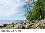 Купить «Берег Финского залива, летний пейзаж», фото № 7577037, снято 12 июня 2015 г. (c) Алина Сбитнева / Фотобанк Лори