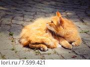 Пушистая рыжая кошка с новорожденным котенком на улице. Стоковое фото, фотограф Maria Siurtukova / Фотобанк Лори