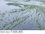 Купить «Затопленные деревья в пойме реки во время паводка», фото № 7606405, снято 23 июня 2015 г. (c) Владимир Мельников / Фотобанк Лори