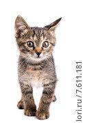 Маленький серый котенок на белом фоне. Стоковое фото, фотограф Владимир Ходатаев / Фотобанк Лори
