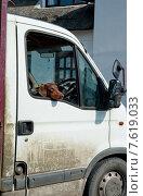 Купить «Венгерский поинтер  смотрит из окна машины», фото № 7619033, снято 6 июня 2013 г. (c) Татьяна Кахилл / Фотобанк Лори