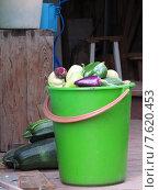 Полное зеленое ведро урожая перцев и кабачков на деревянном крыльце. Стоковое фото, фотограф Екатерина Воронкова / Фотобанк Лори