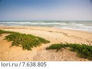 Песчаный пляж на курорте Хаммамет, Тунис. Стоковое фото, фотограф Ирина Буракова / Фотобанк Лори