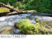 Купить «Вид реки Great Estyube с поваленные деревья после урагана», фото № 7642517, снято 4 августа 2014 г. (c) Александр Карпенко / Фотобанк Лори