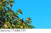 Колибри на ветке. Стоковое фото, фотограф Сергей Шпаков / Фотобанк Лори