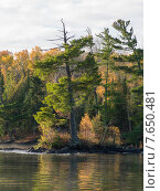 Купить «Trees at the lakeside, Lake of The Woods, Ontario, Canada», фото № 7650481, снято 18 января 2019 г. (c) Ingram Publishing / Фотобанк Лори