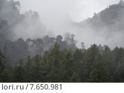 Fog over a forest, Trongsa District, Bhutan (2010 год). Стоковое фото, фотограф Keith Levit / Ingram Publishing / Фотобанк Лори