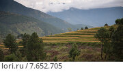 Low angle view of terraced rice fields with mountains, Punakha Valley, Punakha District, Bhutan (2010 год). Стоковое фото, фотограф Keith Levit / Ingram Publishing / Фотобанк Лори