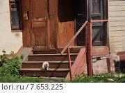 Кошка на деревянном крыльце (2013 год). Стоковое фото, фотограф Светлана Хромова / Фотобанк Лори