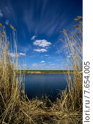 Купить «Сухой тростник на берегу озера», фото № 7654005, снято 12 мая 2015 г. (c) Алексей Маринченко / Фотобанк Лори