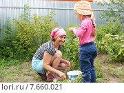 Купить «Бабушка и внучка на даче собирают смородину», фото № 7660021, снято 8 июля 2015 г. (c) Александр Мишкин / Фотобанк Лори