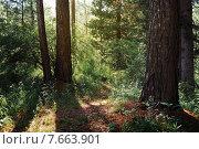 Лесной пейзаж. Стоковое фото, фотограф Лариса К / Фотобанк Лори