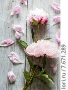 Розовые пеоны. Стоковое фото, фотограф Ирина Буракова / Фотобанк Лори