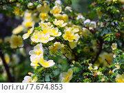 Купить «blossoming plant», фото № 7674853, снято 20 июня 2019 г. (c) Яков Филимонов / Фотобанк Лори