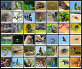 Фауна парка Яла, Шри-Ланка, фото № 7674961, снято 10 ноября 2014 г. (c) Эдуард Кислинский / Фотобанк Лори
