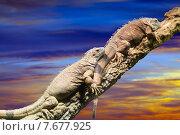 Купить «Few lizards in sunset», фото № 7677925, снято 23 марта 2019 г. (c) Яков Филимонов / Фотобанк Лори