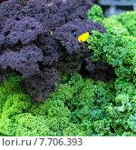 Купить «food green fresh fruit vegetable», фото № 7706393, снято 19 июля 2019 г. (c) PantherMedia / Фотобанк Лори