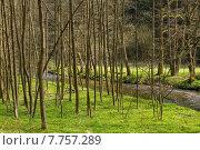 Купить «nature green water natural grass», фото № 7757289, снято 19 октября 2019 г. (c) PantherMedia / Фотобанк Лори