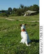 Маленькая белая собачка ждёт своего хозяина. Стоковое фото, фотограф Наталья Пеньшина / Фотобанк Лори