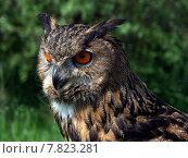 Купить «orange eyes owl raptor buoh», фото № 7823281, снято 17 декабря 2018 г. (c) PantherMedia / Фотобанк Лори