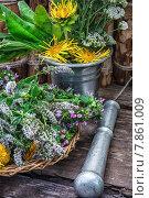 Купить «Мята перечная и другие лекарственные травы», фото № 7861009, снято 12 мая 2020 г. (c) Николай Лунев / Фотобанк Лори