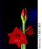Купить «red plant flower blossom bloom», фото № 7887401, снято 18 октября 2018 г. (c) PantherMedia / Фотобанк Лори