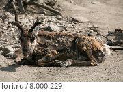 Купить «animal mammal north arctic horns», фото № 8000229, снято 25 апреля 2019 г. (c) PantherMedia / Фотобанк Лори