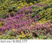 Купить «nature yellow plant wild rock», фото № 8003177, снято 19 февраля 2019 г. (c) PantherMedia / Фотобанк Лори