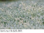 Купить «background caucasian green close up», фото № 8025981, снято 23 февраля 2019 г. (c) PantherMedia / Фотобанк Лори