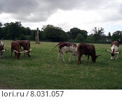 Купить «head neck horn buffalo serengeti», фото № 8031057, снято 21 мая 2018 г. (c) PantherMedia / Фотобанк Лори