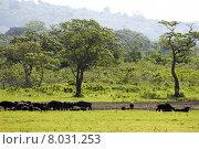 Купить «africa tanzania arushanp kaffernb ffel», фото № 8031253, снято 15 августа 2018 г. (c) PantherMedia / Фотобанк Лори