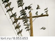 Купить «Pigeons on a Wire», фото № 8053653, снято 16 августа 2018 г. (c) PantherMedia / Фотобанк Лори