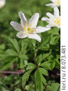 Купить «plant flower bright blossom wet», фото № 8073481, снято 23 февраля 2019 г. (c) PantherMedia / Фотобанк Лори