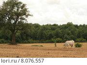 Купить «cow bull herd buffalo bovine», фото № 8076557, снято 21 мая 2018 г. (c) PantherMedia / Фотобанк Лори