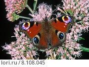 Купить «summer butterfly butterflies buzzer summerly», фото № 8108045, снято 10 декабря 2018 г. (c) PantherMedia / Фотобанк Лори