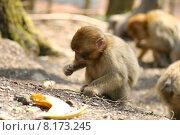 Купить «group animals zoo herd apes», фото № 8173245, снято 19 июня 2019 г. (c) PantherMedia / Фотобанк Лори