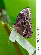 Купить «nature tropical insect butterfly tropics», фото № 8177637, снято 15 октября 2019 г. (c) PantherMedia / Фотобанк Лори