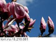 Купить «blue sky plant flower pink», фото № 8210081, снято 19 января 2019 г. (c) PantherMedia / Фотобанк Лори