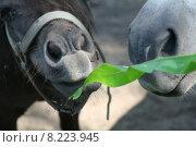 Купить «green animal grass meadow animals», фото № 8223945, снято 19 июня 2019 г. (c) PantherMedia / Фотобанк Лори