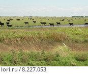 Купить «green black meadow cow curious», фото № 8227053, снято 20 октября 2019 г. (c) PantherMedia / Фотобанк Лори