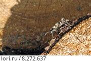 Купить «eye wood legs insect organ», фото № 8272637, снято 15 октября 2019 г. (c) PantherMedia / Фотобанк Лори