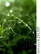 Купить «Berlin, Germany, grass covered with raindrops», фото № 8293597, снято 2 июня 2009 г. (c) Caro Photoagency / Фотобанк Лори