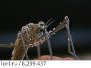 Купить «insect antenna insects spinelessly boreidae», фото № 8299437, снято 15 октября 2019 г. (c) PantherMedia / Фотобанк Лори