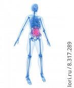 Купить «human anatomy with bellyache», фото № 8317289, снято 26 мая 2019 г. (c) PantherMedia / Фотобанк Лори