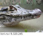 Купить «nature water river animals teeth», фото № 8320245, снято 19 июня 2019 г. (c) PantherMedia / Фотобанк Лори