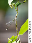 Купить «nature close up animal plant», фото № 8342889, снято 26 мая 2019 г. (c) PantherMedia / Фотобанк Лори