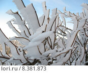 Купить «christmas winter xmas ice wind», фото № 8381873, снято 21 октября 2018 г. (c) PantherMedia / Фотобанк Лори