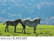 Купить «animal mammal horse farm gregarious», фото № 8410041, снято 26 марта 2019 г. (c) PantherMedia / Фотобанк Лори