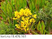 Желтые цветы. Стоковое фото, фотограф DMITRII KUDASOV / Фотобанк Лори